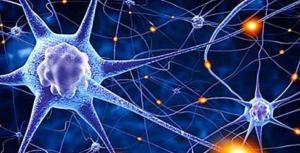 Невропластичност – М-р Марија Бојаџи Љатко